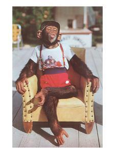 Chimp Sitting in Armchair