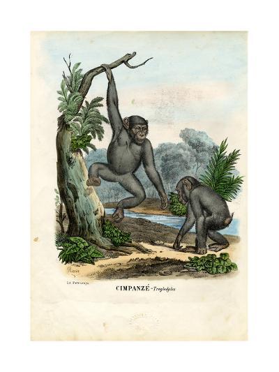 Chimpanzee, 1863-79-Raimundo Petraroja-Giclee Print