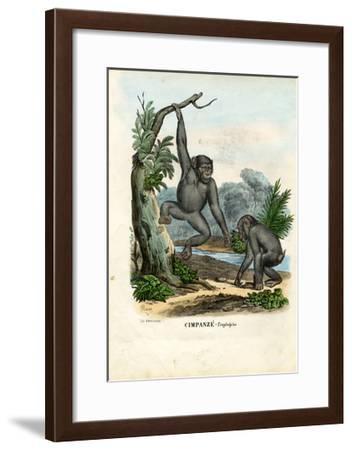 Chimpanzee, 1863-79-Raimundo Petraroja-Framed Giclee Print