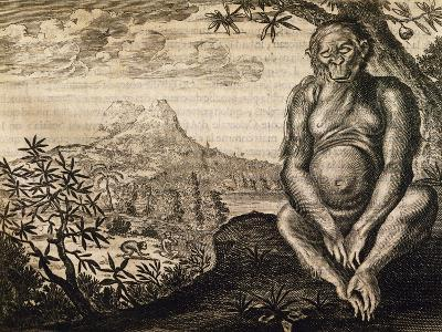 Chimpanzee, Engraving from the Description of Africa-Olfert Dapper-Giclee Print