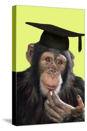 Chimpanzee in Mortarboard