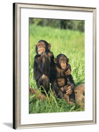 Chimpanzees-DLILLC-Framed Photographic Print