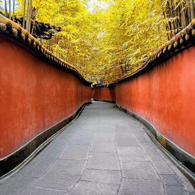 China 10MKm2 Collection - Alley Bamboo-Philippe Hugonnard-Photographic Print