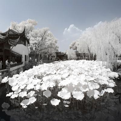 China 10MKm2 Collection - Another Look - Lotus Lake-Philippe Hugonnard-Photographic Print
