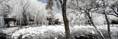 China 10MKm2 Collection - Another Look - Lotus Park-Philippe Hugonnard-Photographic Print