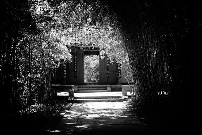 China 10MKm2 Collection - Bamboo Forest-Philippe Hugonnard-Photographic Print