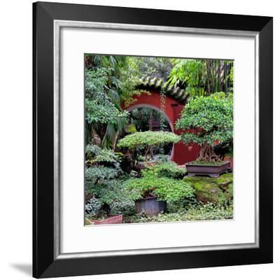 China 10MKm2 Collection - Bonsai Trees-Philippe Hugonnard-Framed Photographic Print