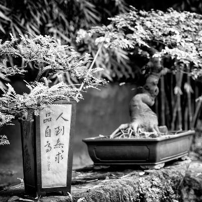 China 10MKm2 Collection - Bonsai Trees-Philippe Hugonnard-Photographic Print