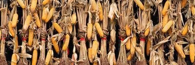 https://imgc.artprintimages.com/img/print/china-10mkm2-collection-corn-drying_u-l-q119xz30.jpg?p=0