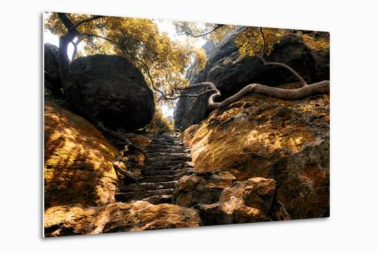 China 10MKm2 Collection - Forest ray of light-Philippe Hugonnard-Metal Print