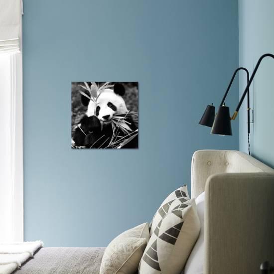 China 10mkm2 Collection Giant Panda Photographic Print Philippe Hugonnard Art Com