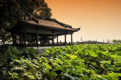 China 10MKm2 Collection - Lotus Garden-Philippe Hugonnard-Photographic Print