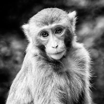 China 10MKm2 Collection - Monkey Portrait-Philippe Hugonnard-Photographic Print
