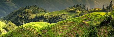 China 10MKm2 Collection - Rice Terraces - Longsheng Ping'an - Guangxi-Philippe Hugonnard-Photographic Print