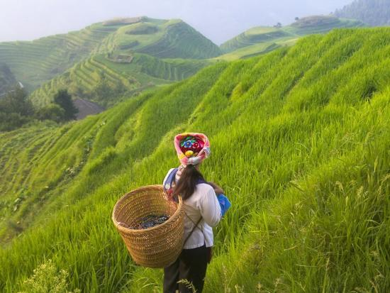 China, Guangxi Province, Longsheng, Zhuang Woman with Rice Terraces in the Mountain-Keren Su-Photographic Print