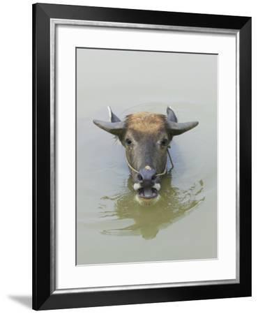 China, Guangxi Province, Yangshuo, Water Buffalo in the River-Keren Su-Framed Photographic Print