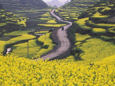 China, Guizhou Province, Mountain Covered with Canola Flowers-Keren Su-Photographic Print
