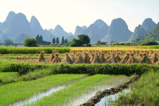 China, Rice Fields at the Yulong River, Landscape, Karst Mountains-Catharina Lux-Photographic Print