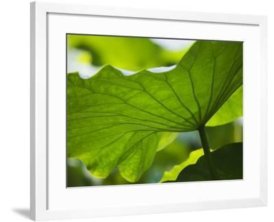 China, Sichuan Province, Lotus Leaves in the Pond-Keren Su-Framed Photographic Print