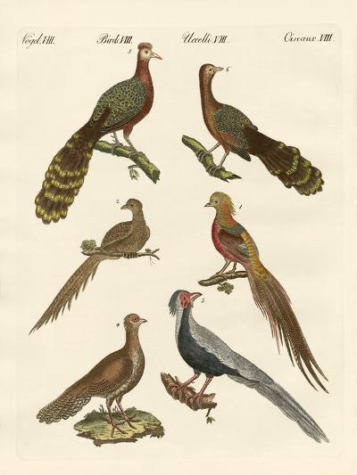 Chinese Birds--Giclee Print