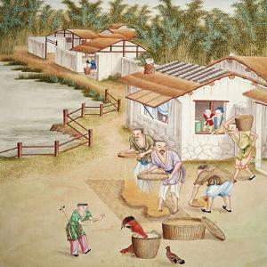 Chinese Farmers Sieving Rice