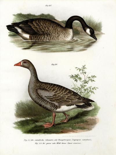 Chinese Goose, 1864--Giclee Print