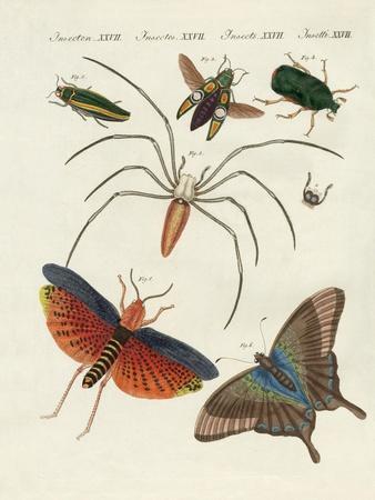 https://imgc.artprintimages.com/img/print/chinese-insects_u-l-pvr7hq0.jpg?p=0