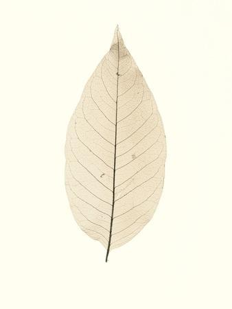 https://imgc.artprintimages.com/img/print/chinese-magnolia_u-l-q1b7caf0.jpg?p=0