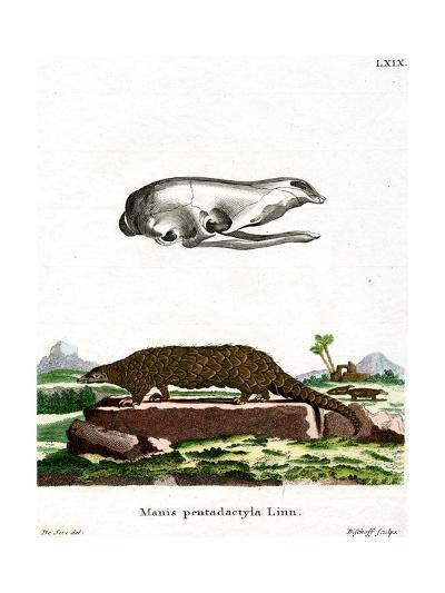 Chinese Pangolin--Giclee Print