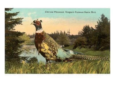 Chinese Pheasant, Oregon Game Bird--Art Print