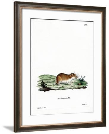 Chinese Striped Hamster--Framed Giclee Print