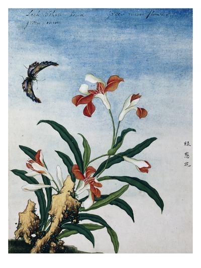 Chinese Watercolor of a Green Onion Flower--Giclee Print