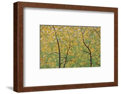 The Spring of Dita Bark Trees