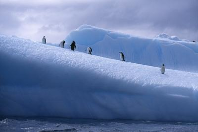 Chinstrap Penguins Standing on Ice-DLILLC-Photographic Print
