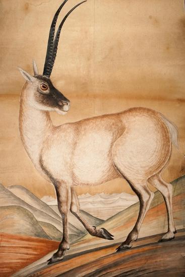 Chiru, 1840-Brian Houghton Hodgson-Giclee Print