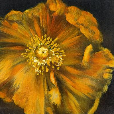 Chocolate Poppy IV-Dysart-Giclee Print