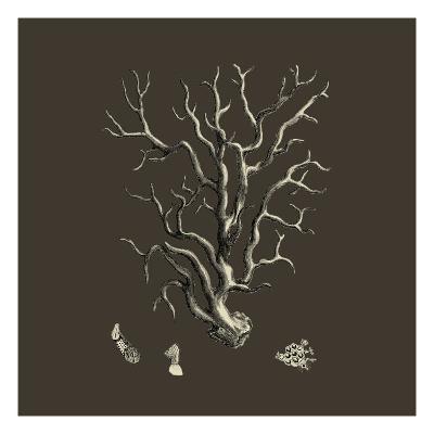 Chocolate & Tan Coral I-Vision Studio-Art Print