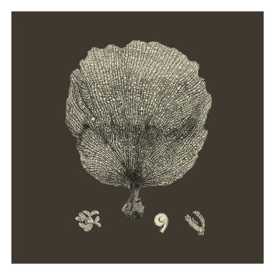 Chocolate & Tan Coral II-Vision Studio-Art Print