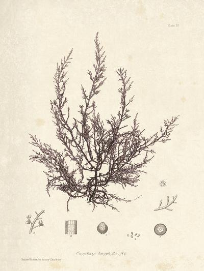 Chondria dasyphylla-Henry Bradbury-Giclee Print