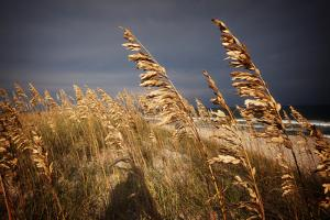 Dune Grasses in Cape Hatteras in North Carolina by Chris Bickford