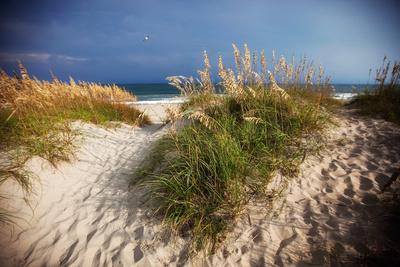 Dunes on the Beach in Cape Hatteras National Seashore in North Carolina