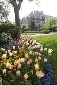 Paris Flowers by Chris Bliss
