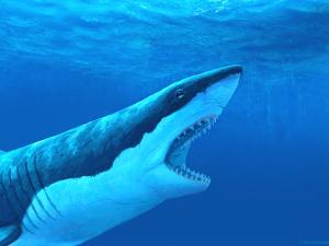 Great White Shark by Chris Butler