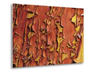 Arbutus Tree, Bark Pattern, British Columbia, Canada. by Chris Cheadle