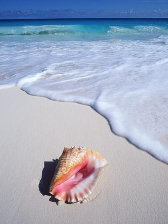 Mexico, Yucatan Peninsula, Carribean Beach at Cancun, Conch Shell on Sand by Chris Cheadle