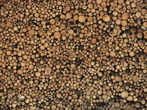 Pulp Wood Stacked in Processing Yard, British Columbia, Canada. by Chris Cheadle
