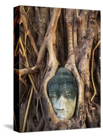 South East Asia, Thailand, Ayuthaya, Wat Mahathat, Buddha Head Entwined in Roots of Banyan Tree