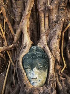 South East Asia, Thailand, Ayuthaya, Wat Mahathat, Buddha Head Entwined in Roots of Banyan Tree by Chris Cheadle