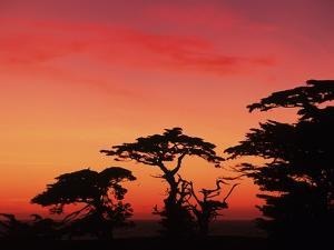 USA, California, Carmel, Highway 1 on Coast, Pebble Beach, Juniper Trees at Sunset by Chris Cheadle