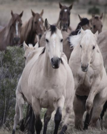 Run Free By Chris Dunker
